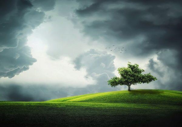 אדריכלות ירוקה – ברת קיימא